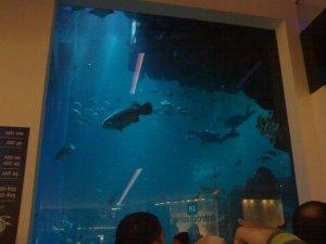 Aquarium...Dubai mall